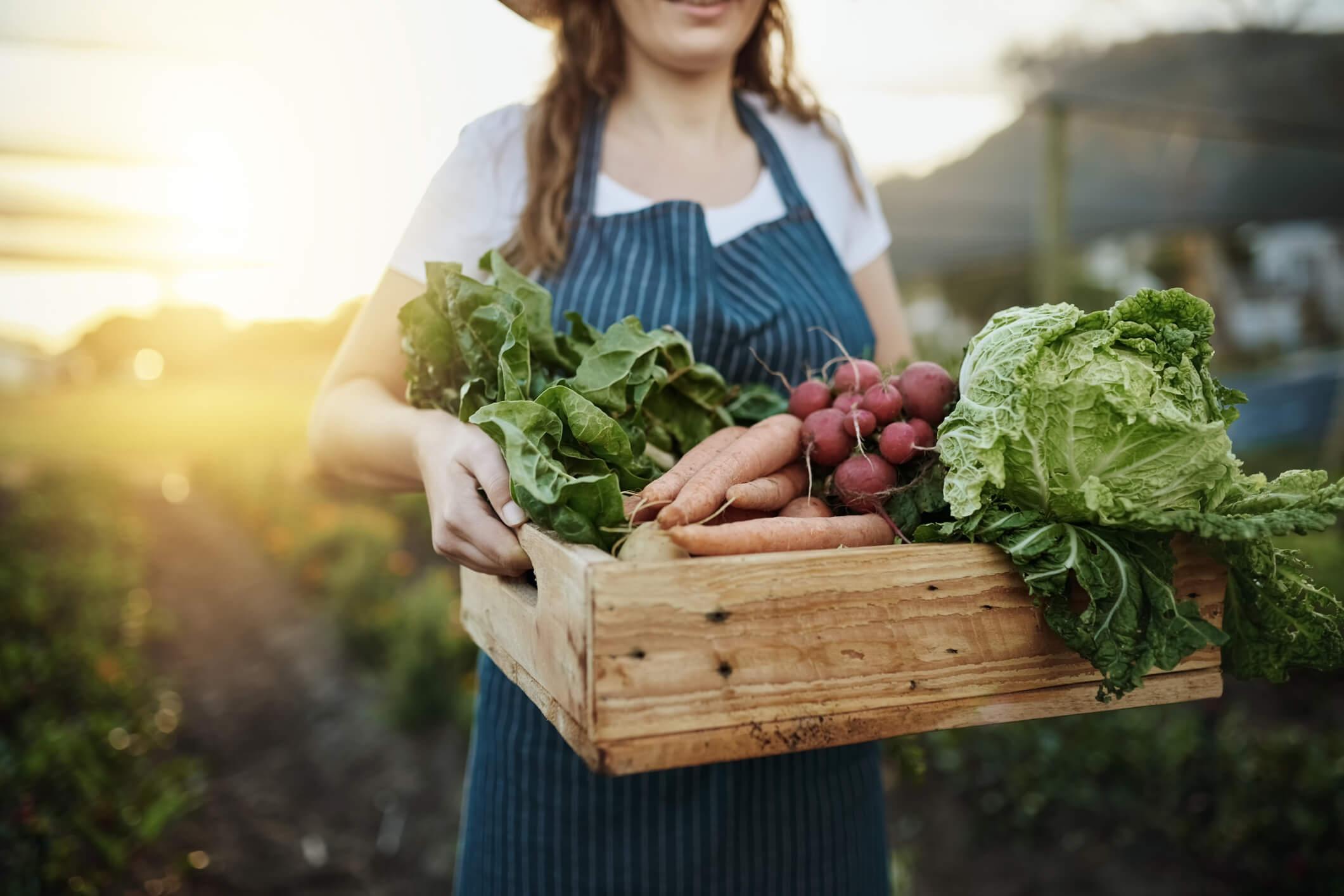 Quer aprender como rechear o seu cardápio de maneira simples com alimentos ricos em minerais? Acesse o nosso post e confira as informações!